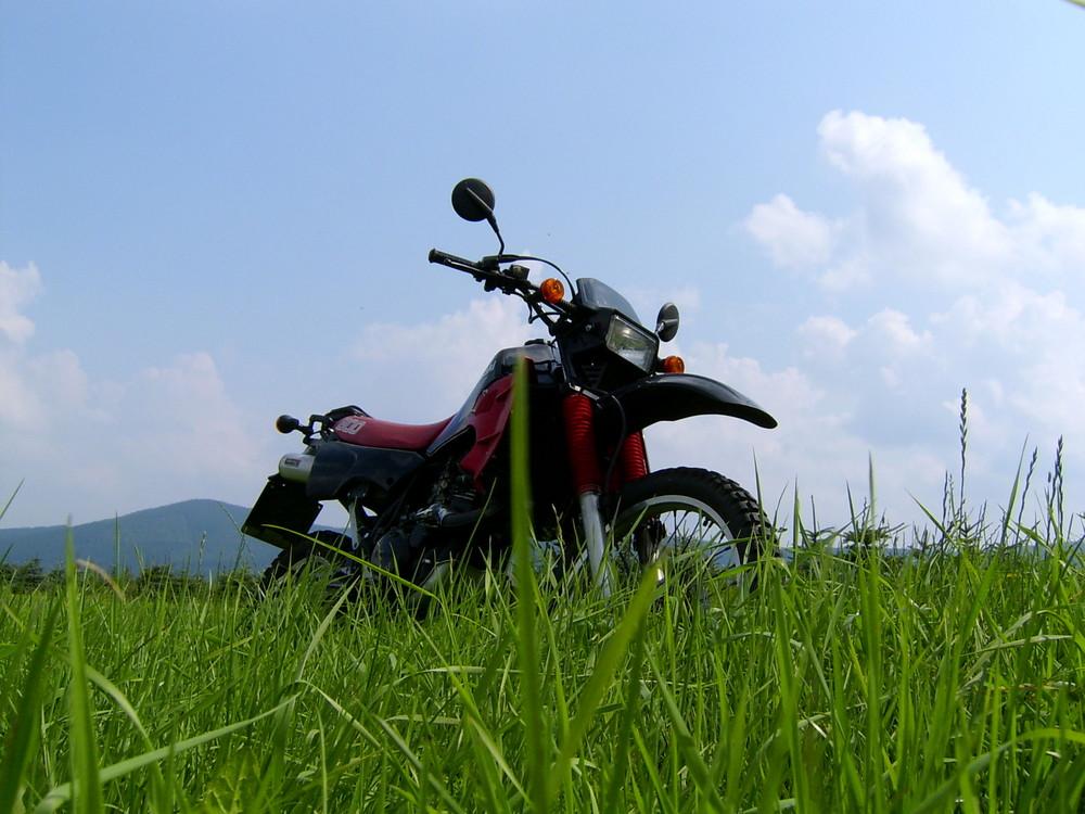Kawasakis KLR 600