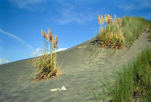 Kawhia Beach