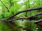 Kayaking in Mysliborskie region, river Mysla