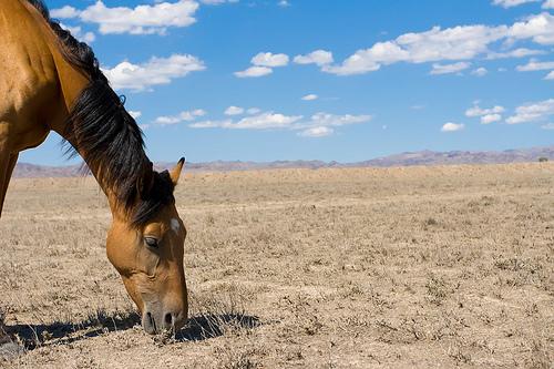 Kazakhstan Wild Horse