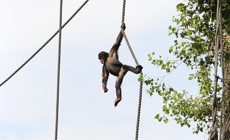 Keep me hanging on!