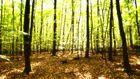 Kein Rabatz im Zauberwald, sondern Stille
