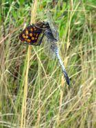 Kein Schmetterlingsfreund !
