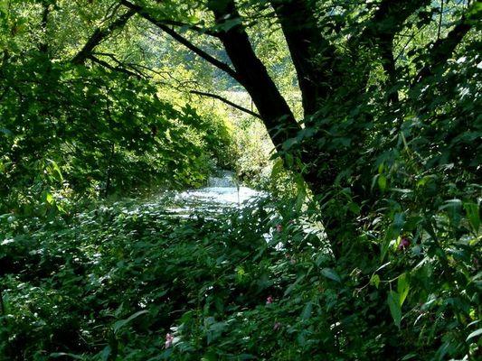 Kein Teich! ein Bach und ein Fluss