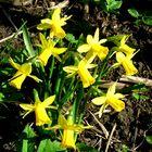 Kein Widerspruch, es ist Frühling
