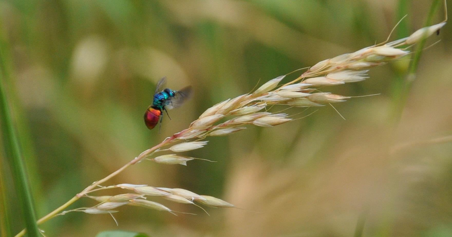 keine Ahnung was das für eine Fliege ist