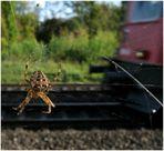 Keine Angst vor der Eisenbahn