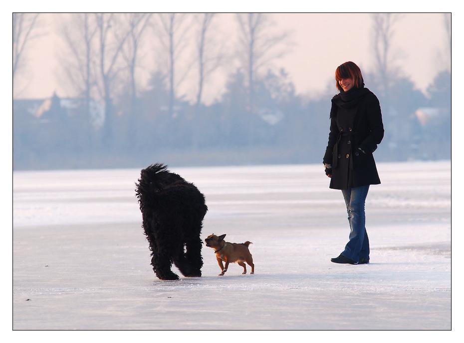 *Keine Angst vor großen Hunden*