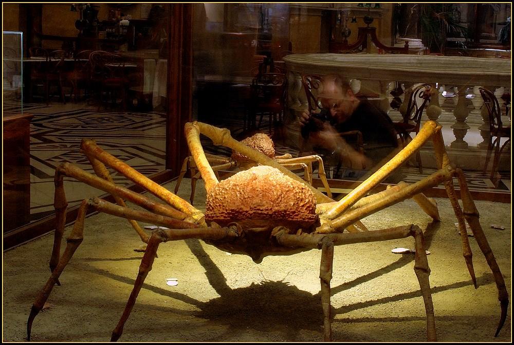 Keine Arachnophobie