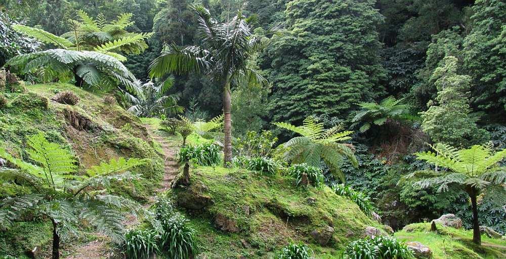 Keine Chancen gegen den Azoren Regenwald