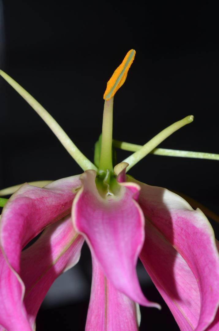 keine Orchidee III