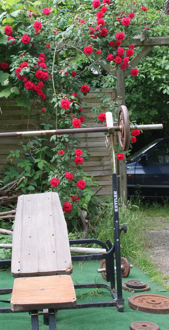 keine rosen ohne dornen - keine muckis ohne aua
