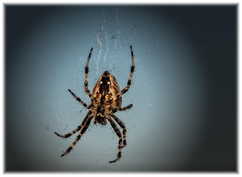 Keine Spinne