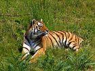 ..keine Tigerente!
