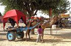 keine Touristen, ich leg mich mal hin, paß du inzwischen aufs Kamel auf