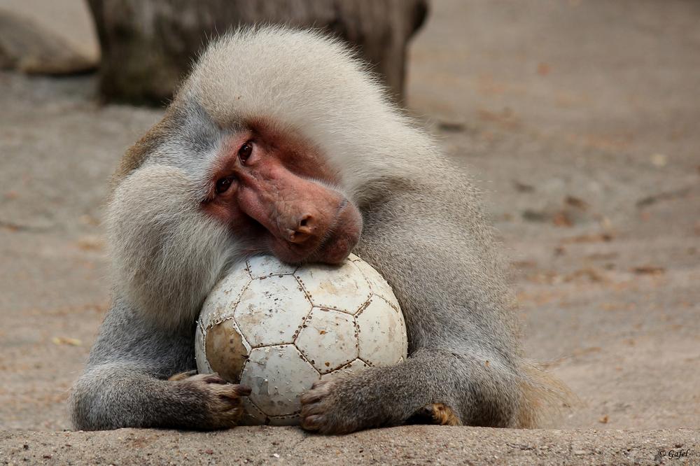 Keiner spielt mit mir Fußball