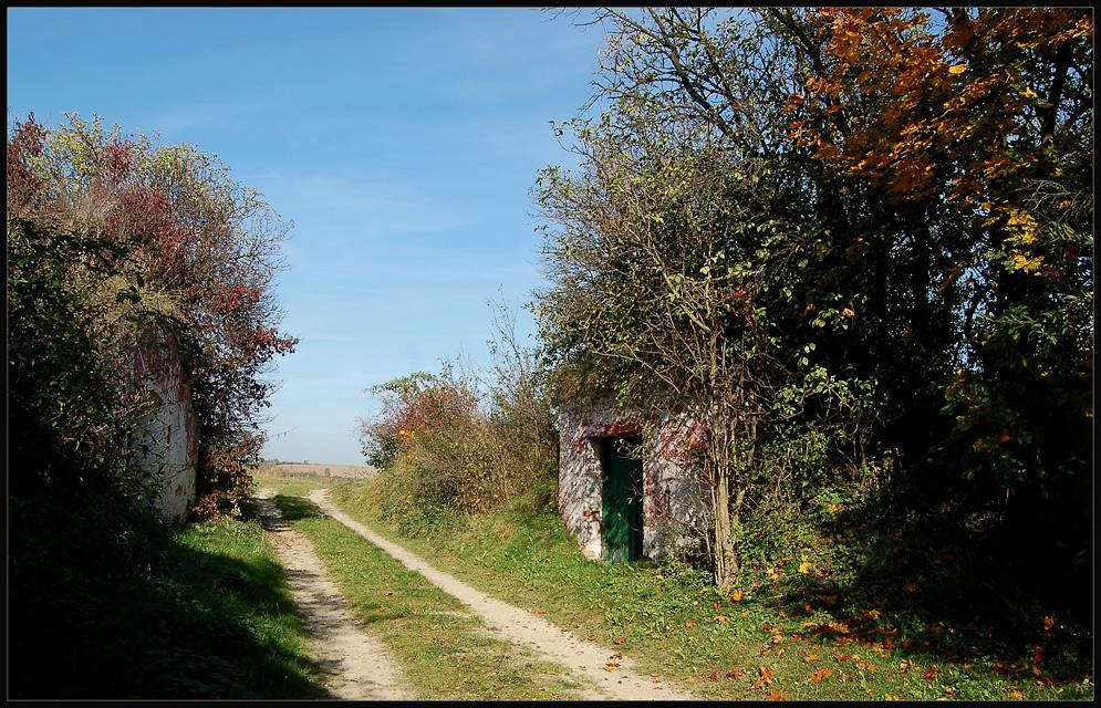 Kellergasse in Großmugl - Herbst *2*
