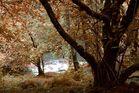 keltischer Wald