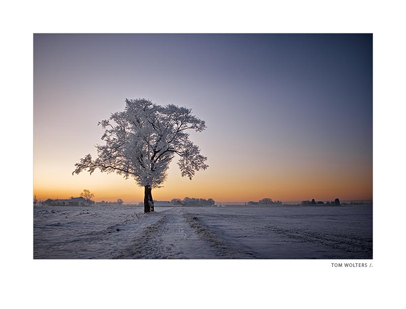 Kempen - Baum am Hof Fliether
