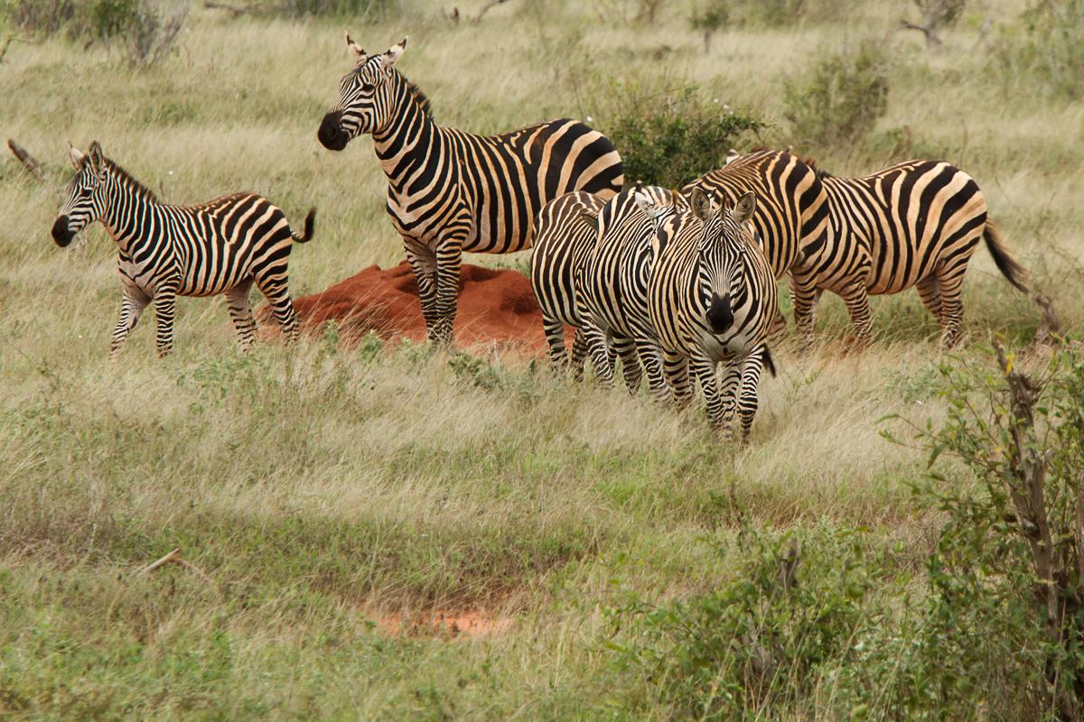 Kenia 2014 # 003