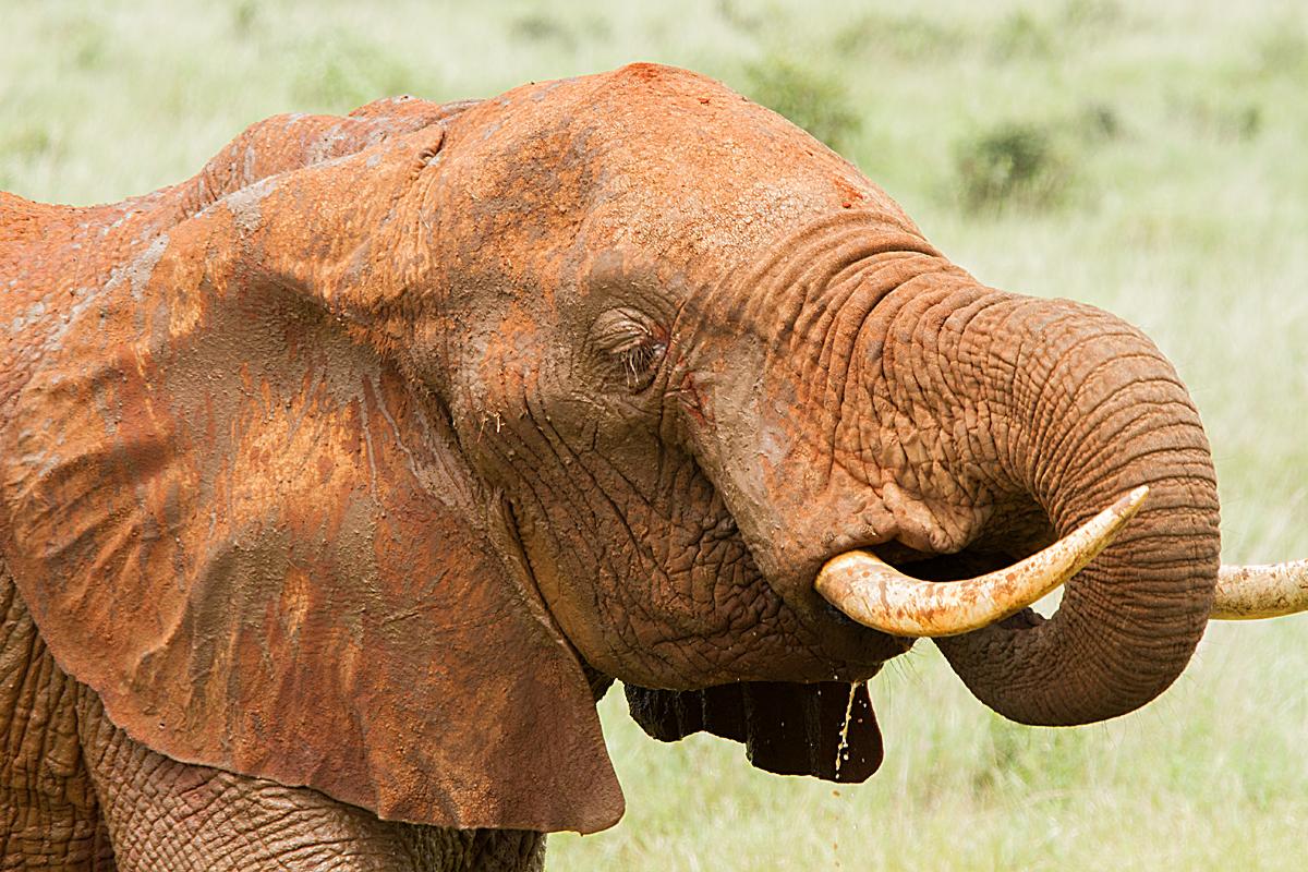 Kenia 2014 # 006
