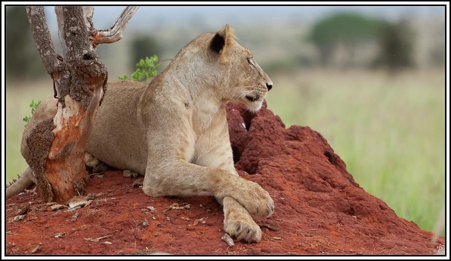 Kenia-Eindrücke, Safari 10, Relaxing