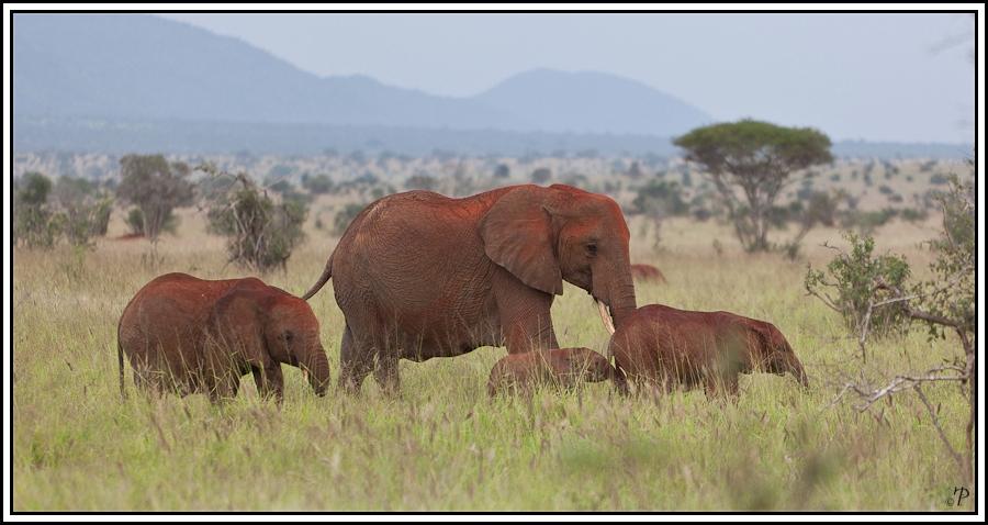 Kenia-Eindrücke, Safari 13