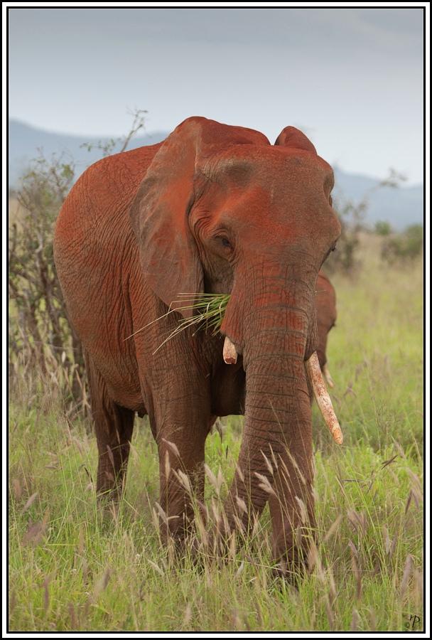 Kenia-Eindrücke, Safari 15