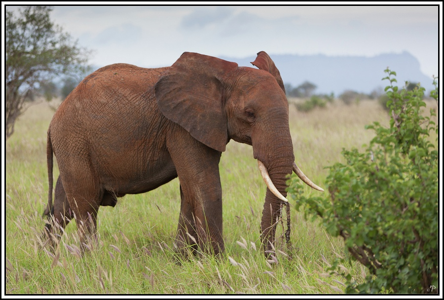 Kenia-Eindrücke, Safari 16