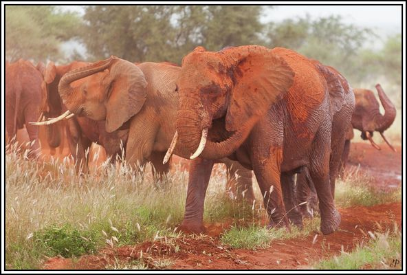 Kenia-Eindrücke, Safari 21