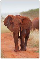 Kenia-Eindrücke, Safari 22 - Version Farbe