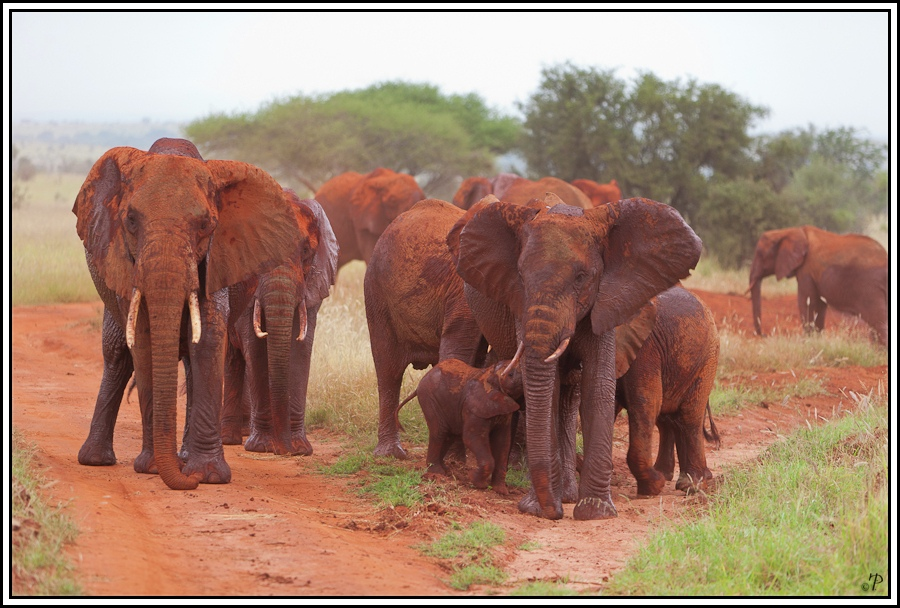 Kenia-Eindrücke, Safari 24