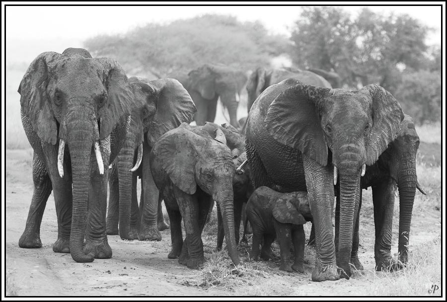 Kenia-Eindrücke, Safari 25