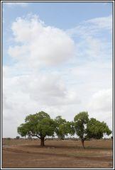Kenia-Eindrücke, Safari 31