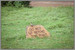 Kenia-Eindrücke, Safari 32