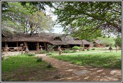 Kenia-Eindrücke, Safari 35