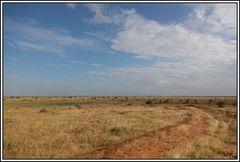 Kenia-Eindrücke, Safari 37