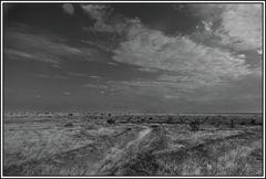 Kenia-Eindrücke, Safari 38