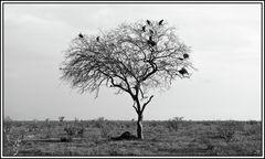 Kenia-Eindrücke, Safari 42