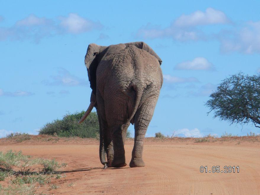 Kenia National Park Tsavo-Ost .
