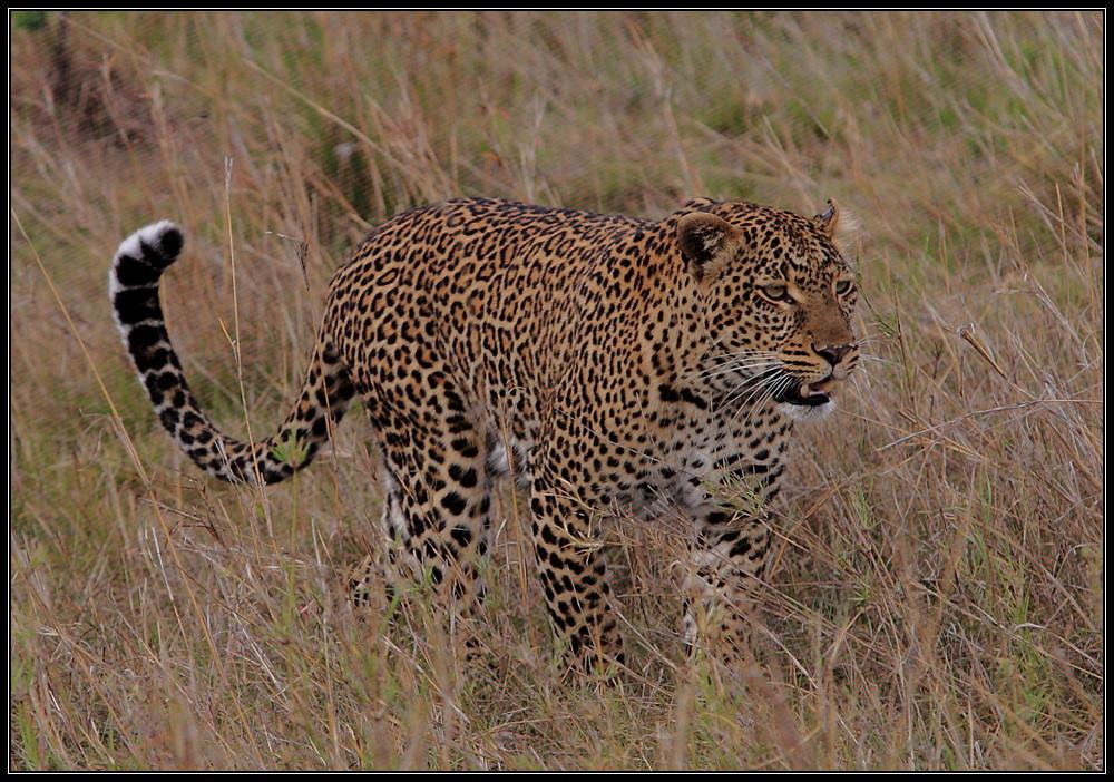 Kenia Rundreise VIII