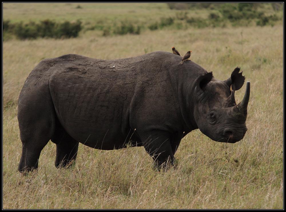 Kenia Rundreise XI