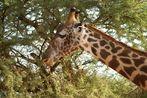Kenia-Safari Tsavo East National Park 7