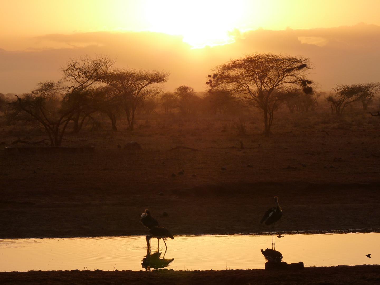 Kenia Tsavo Nationalpark