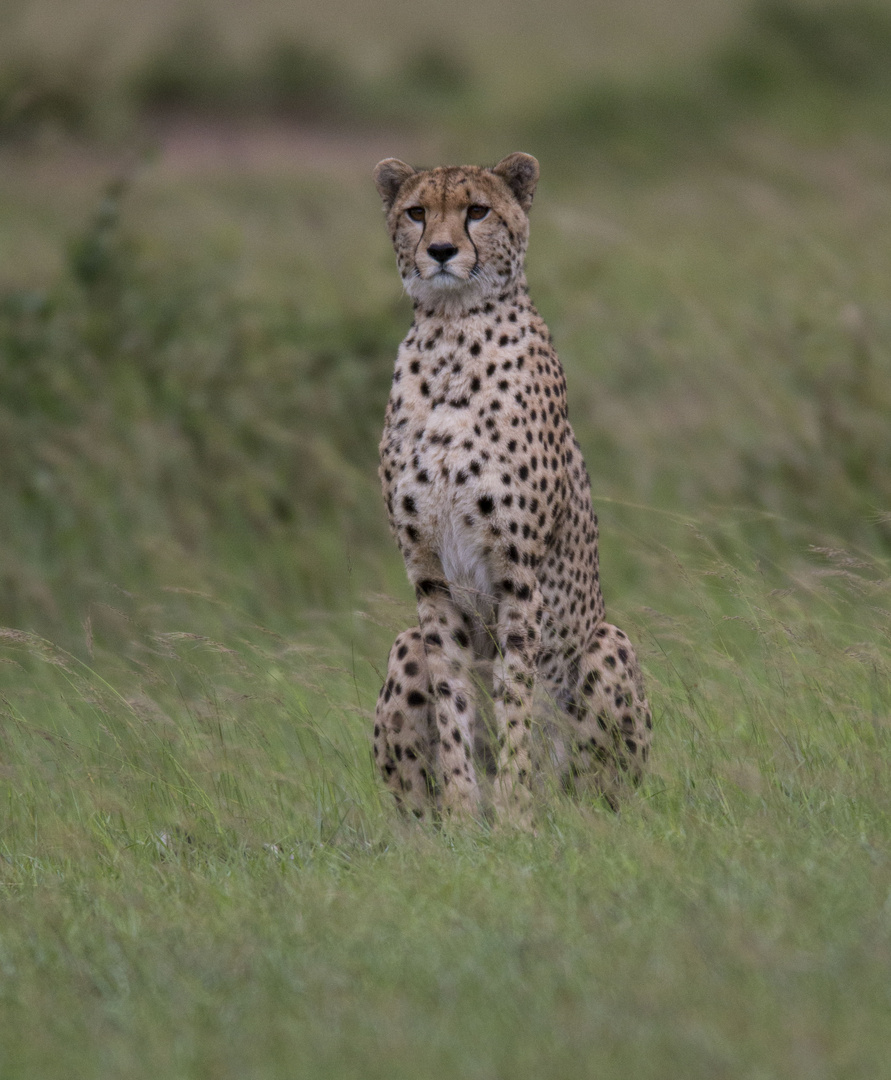 Kenia,s Top Model