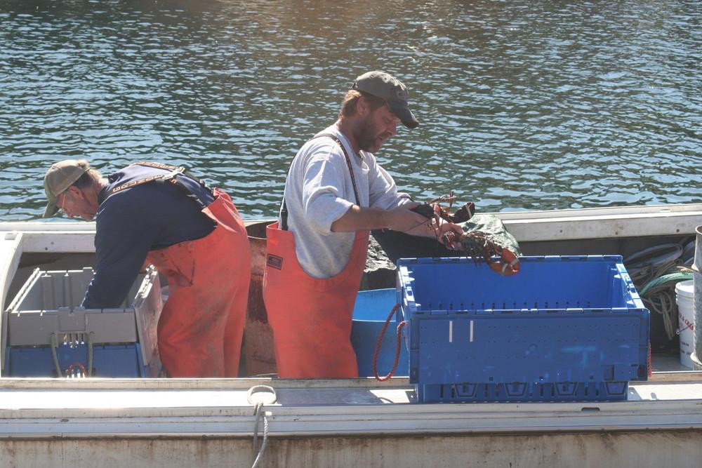 Kennebunkport / Lobster Fischer