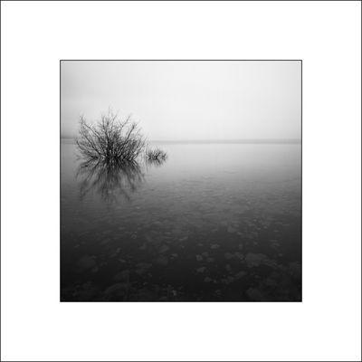 Kennedy Lake Tree