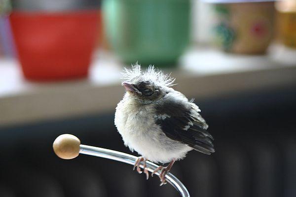 Kennt einer diesen Vogel?