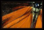 Kennzeichen Orange 38-08