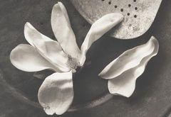 Kenro Izu - Still life - 16